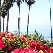 California TRIP 2